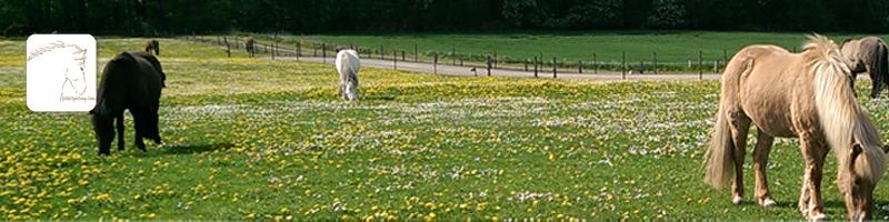 Heste inddraget i terapI_4_GitteSperling